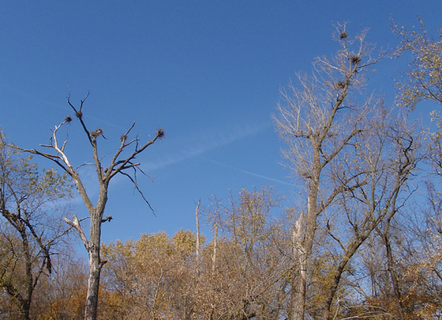 Middle Raccoon River Rookery