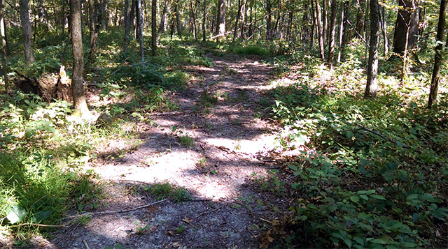 Shimek State Forest - Keosauqua Unit Trail
