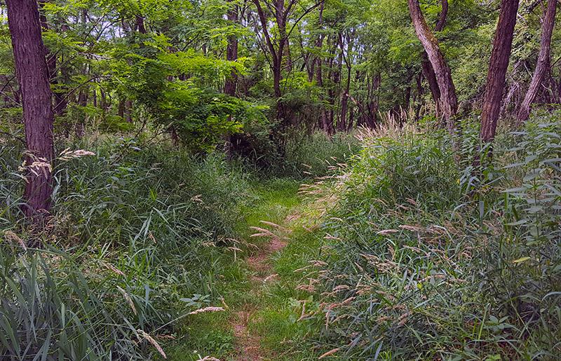 Viking Lake Trail